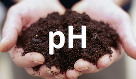 Badanie odczynu pH gleby