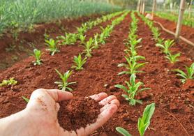 Analiza gleby - pakiet rozszerzonych badań glebowych dla rolnictwa